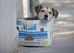 ¿Cómo hizo Holanda para ser el primer país sin perros callejeros?